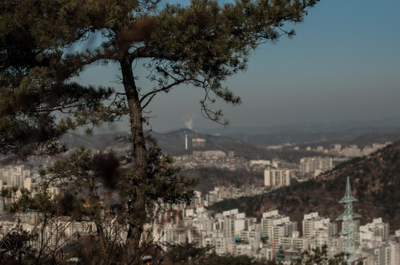 Tree and cityscape from Nokbeon, looking towards Gyeonggi-do (2013, P.M. Lydon)