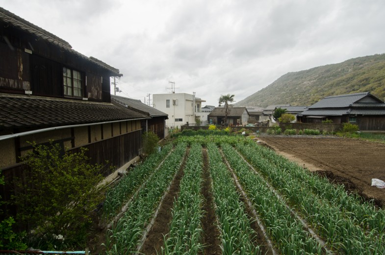 One of the many small agriculture plots on Megijima