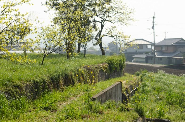 Mr. Okitsu's Natural Farm in Tokushima, Shikoku, Japan